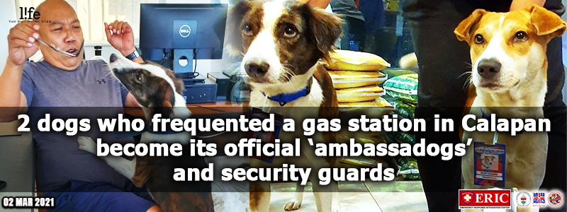 2 dogs who frequented a gas station in Calapan become its official 'ambassadogs' and security guards